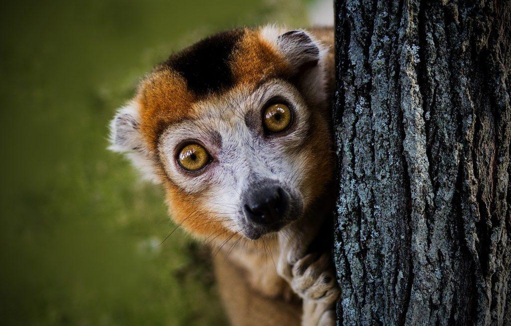 Voyages authentiques à Madagascar