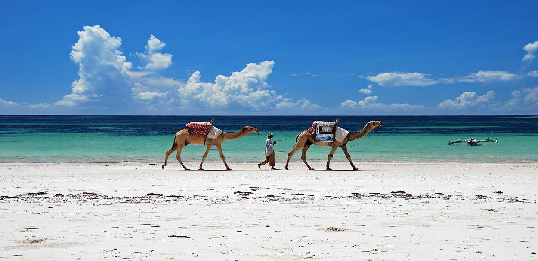 Diani beach, safari et plage au Kenya