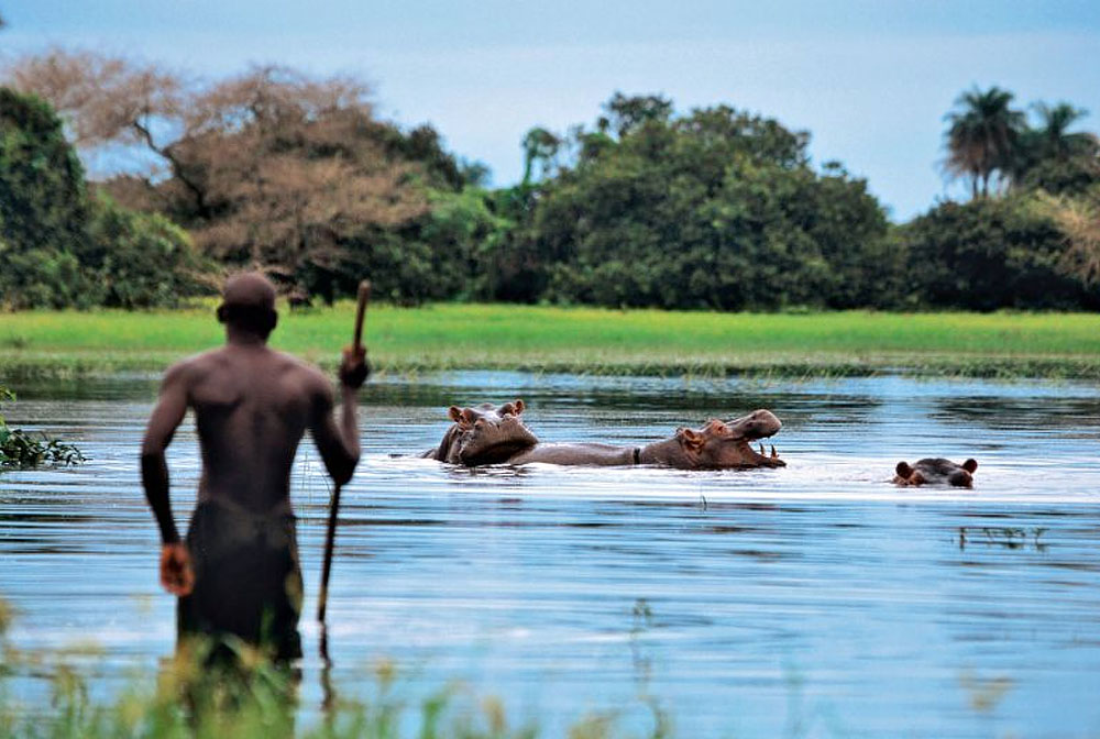 Hippopotame, Bijagos Guinée Bissau