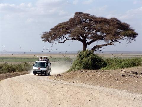 van safari, kenya