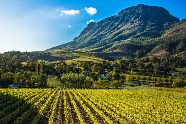 Stellenbosch - autotour en Afrique du sud
