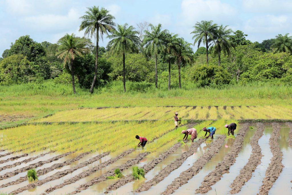 Village en Guinée Bissau