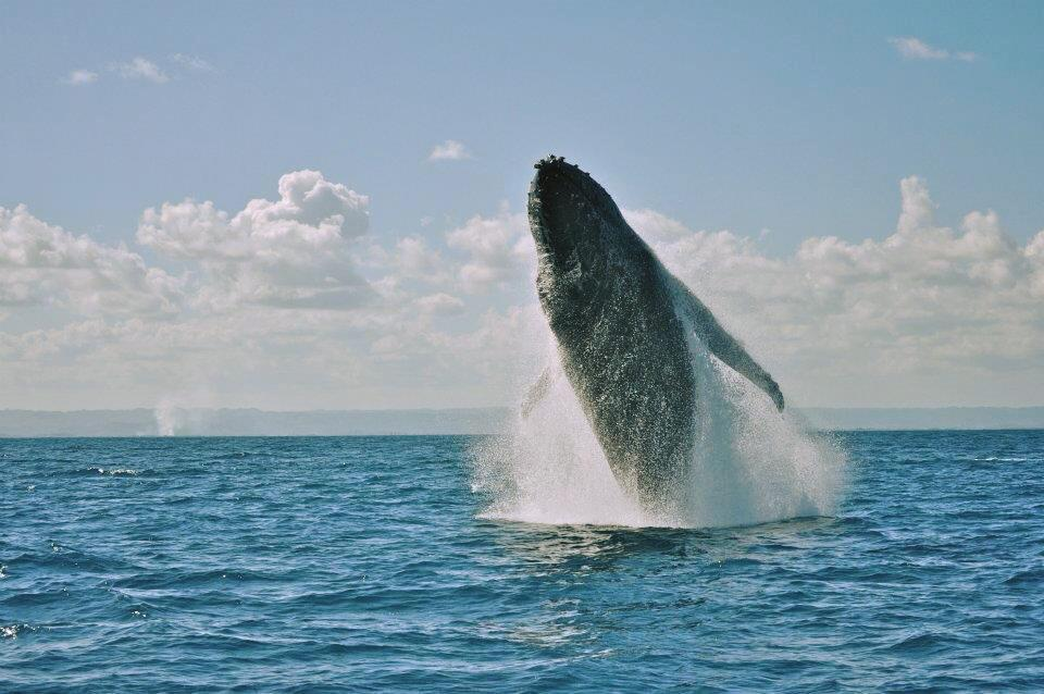 Voir baleines à Madagascar