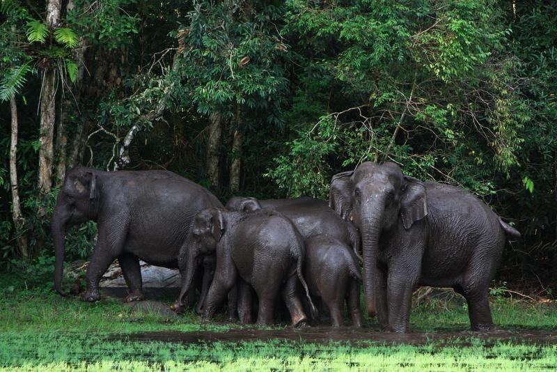 rencontrez les éléphants au Parc de Taï lors de votre voyage en Côte d'Ivoire en famille