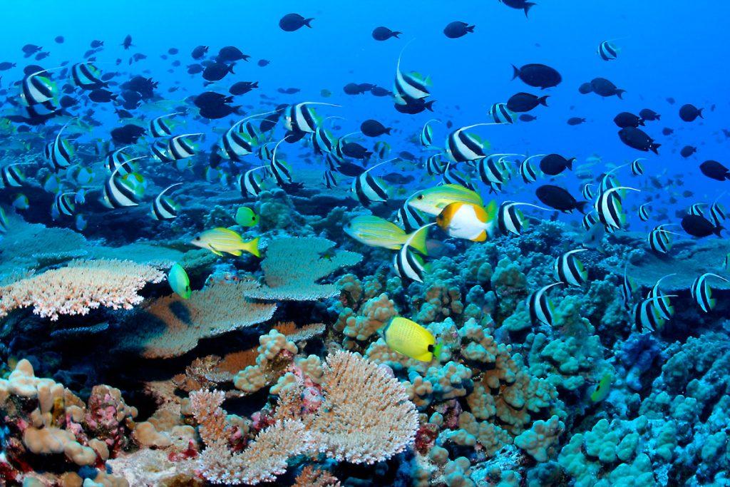 Plongée responsable à Ile Maurice avec Fantastic Africa