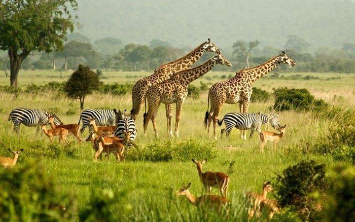 Safari en Ouganda - circuit en Ouganda