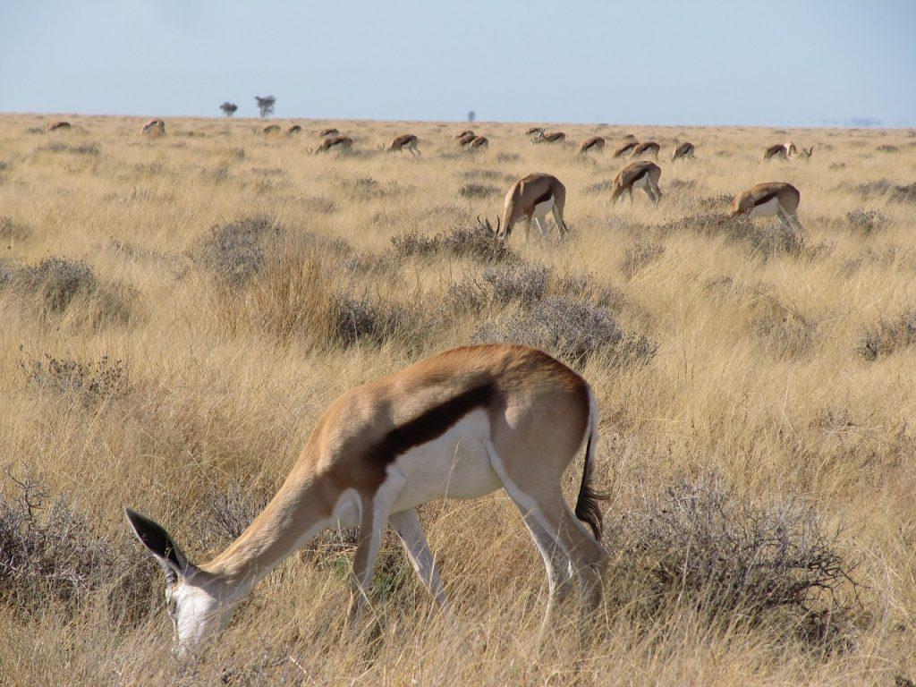 désert du Kalahari