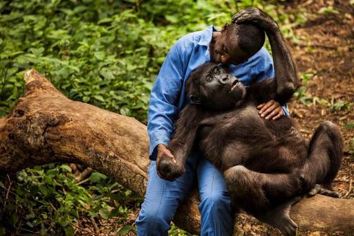voir les gorilles au Rwanda