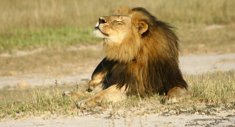 safari kalahari