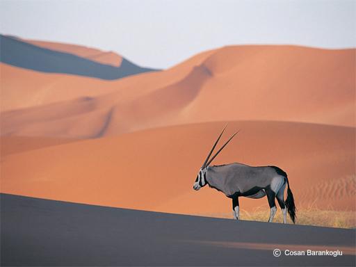 Sossuvlei, Namibie - Voyage en Namibie en famille