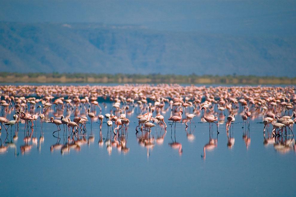 Parc du lac Manyara