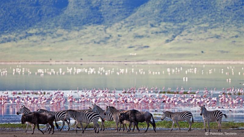 Lac Manyara, safari en Tanzanie