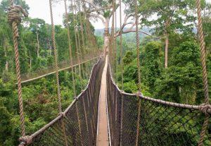 Parc de Kakum - Ghana
