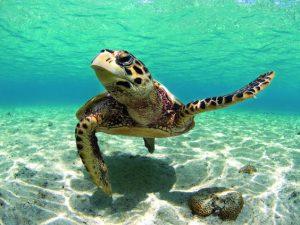 Plongée Nosy Bé - Madagascar
