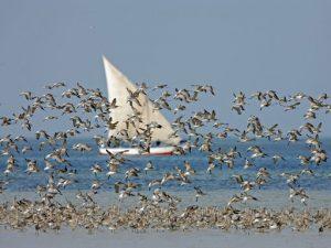observation oiseaux bijagos