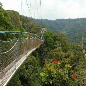 Trail - Forêt Nyungwe