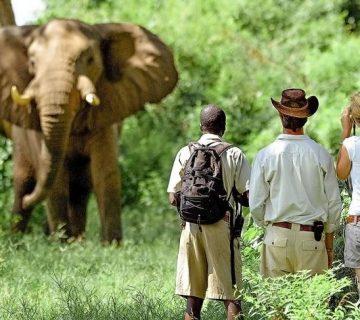 safari pédestre en zambie