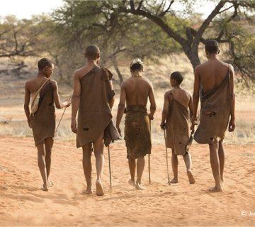 Circuit désert du Kalahari