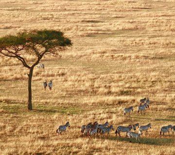 safari parc du serengeti , Tanzanie